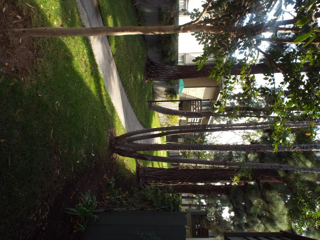 Timbers Apartments Lake Forest