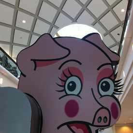 Photo of Macys Pink Pig