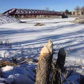 Photo of Peace Bridge Beaver Lodge