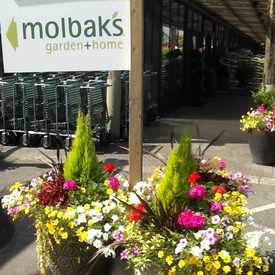 Photo of Molbak's