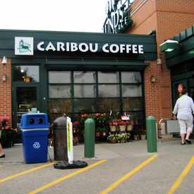 Photo of caribou Lunds