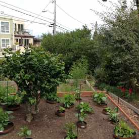 Photo of Clipper Terrace Community Garden