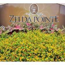 Rental info for Zelda Pointe