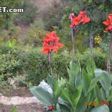 Rental info for One Bedroom In Mid City San Diego in the El Cerrito area