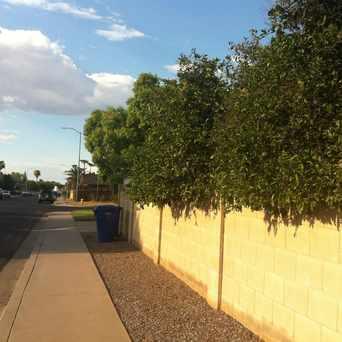 Photo of Orange Tree in North Garden Grove, Mesa