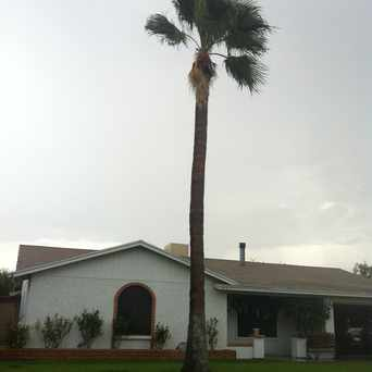 Photo of Palm Tree in Mesa