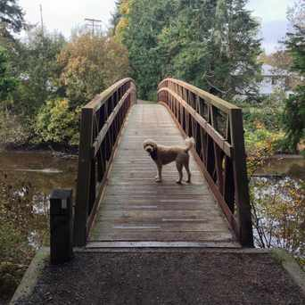 Photo of Colquitz River Trail in Saanich