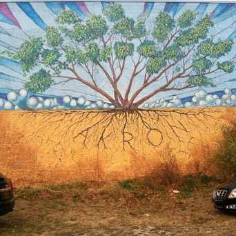Photo of Tree in Elizabeth Park Valley, Akron