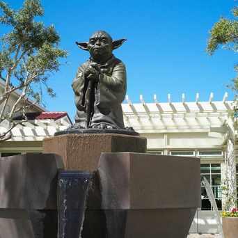 Photo of Yoda Statue in Presidio National Park, San Francisco