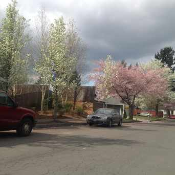 Photo of Trees along the city streets in Gresham