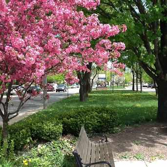 Photo of Shaker Square in Buckeye - Shaker, Cleveland