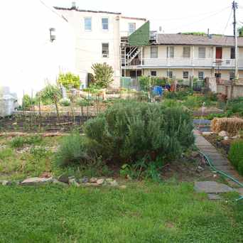 Photo of Community Garden in Upper Fells Point, Baltimore
