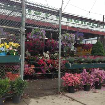 Photo of Florist And Nursery in Lower Washington - Mount Hope, Boston