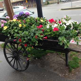 Photo of Exotic Flowers in Lower Washington - Mount Hope, Boston