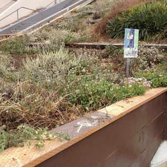 Photo of Green Hairstreak Butterfly Breeding Ground at Rocky Outcrop in Golden Gate Heights, San Francisco