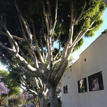 Photo of Santa Monica / La Cienega in West Hollywood