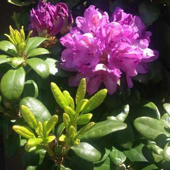 Photo of Outdoor Flower Garden in Roseway, Portland