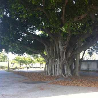 Photo of Mangrove Tree and Parking in Fort Lauderdale
