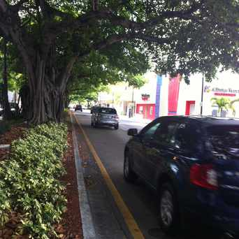 Photo of Tree Lined Streets in Coral Way, Miami