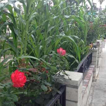Photo of Private Gardens in Santa Ana