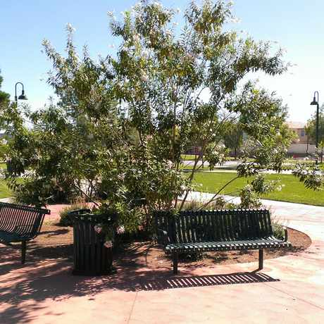 Photo of Pioneer Park in Las Vegas