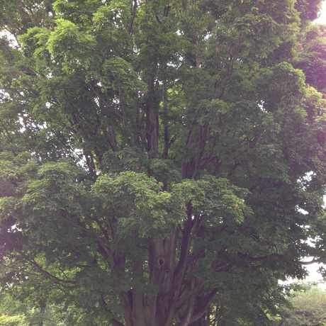 Photo of Older trees in Ellwanger-Barry, Rochester