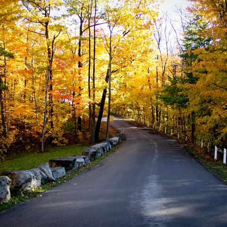 Photo of Burgoyne Woods Park in St. Catharines