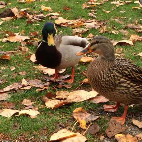Photo of Idylwood Park in Redmond