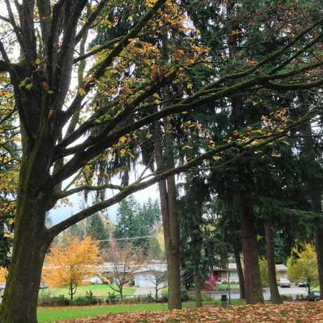 Photo of Lake Hills Park in Sammamish-East Lake Hills, Bellevue