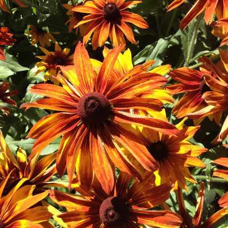 Photo of Washington Park Gardens in Washington Park, Denver
