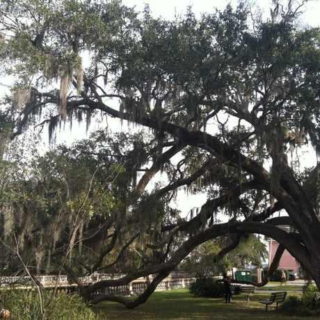 Photo of Mom's Park in Jacksonville