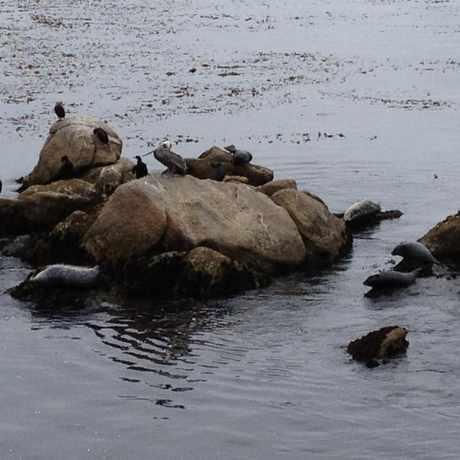 Photo of Monterey Bay Aquarium Seashore Sleepover in Monterey