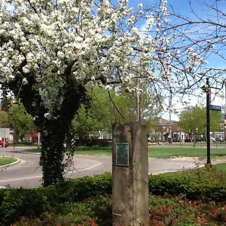 Photo of Shaker Square in Buckeye - Shaker, Cleveland