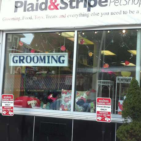 Photo of Plaid & Stripe Pet Grooming in Wayland, Providence