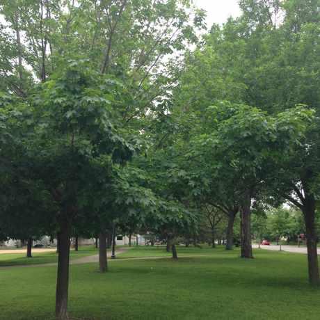 Photo of Logan Park in Logan Park, Minneapolis