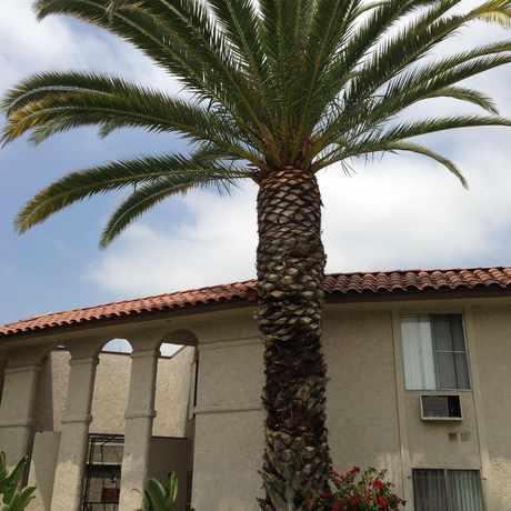 Photo of Adams St in Citrus Grove, Glendale