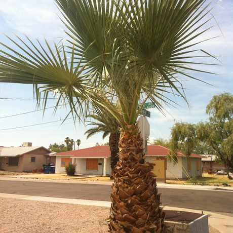 Photo of Palm Tree in Tempe