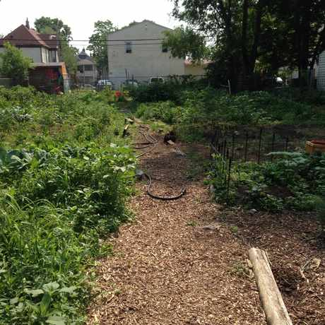 Photo of Shalom Garden, Community Garden in Minneapolis