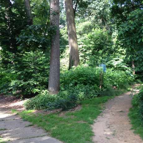 Photo of Carpenter Woods in West Mount Airy, Philadelphia