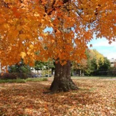 Photo of Nat Turner Park in Newark